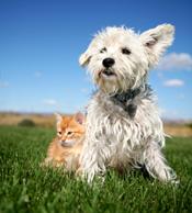 Dog-cat-fleas