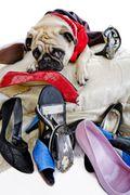 Dogandshoes