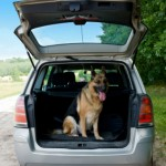 Dog-Friendly-Travel-Road-Trip