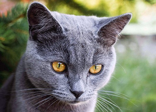 Top 5 Amazing Cat Facts www.NaturalCatFoodStore.com