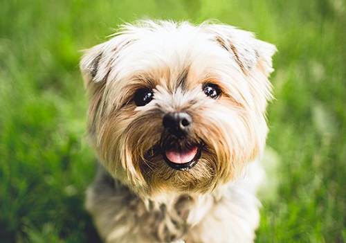 Adorable-terrier-paleo-dog-www.HealthyPetPeeps.com