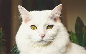 Why people prefer cats www.HealthyPetPeeps.com