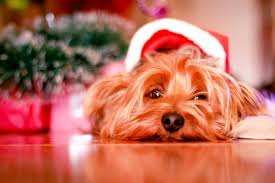 Holiday Dog www.HealthyPetPeeps.com