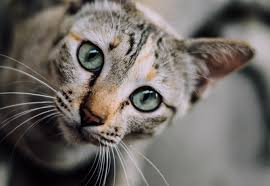 5 Amazing Facts About Cats www.NaturalCatFoodStore.com