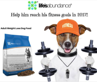 Lifes Abundance Weight Loss Food For Dogs www.AZJungle