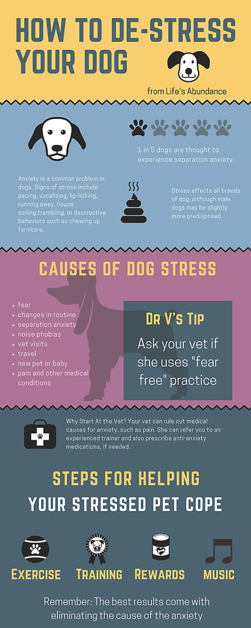 How-to-Avoid-Dog-Stress www.HealthyPetPeeps.com