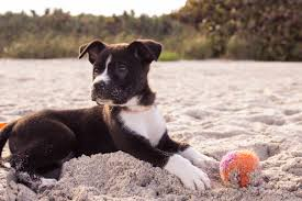 Help Pets Stay Chill This Summer www.HealthyPetPeeps.com