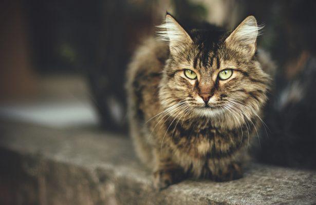 Sassycat