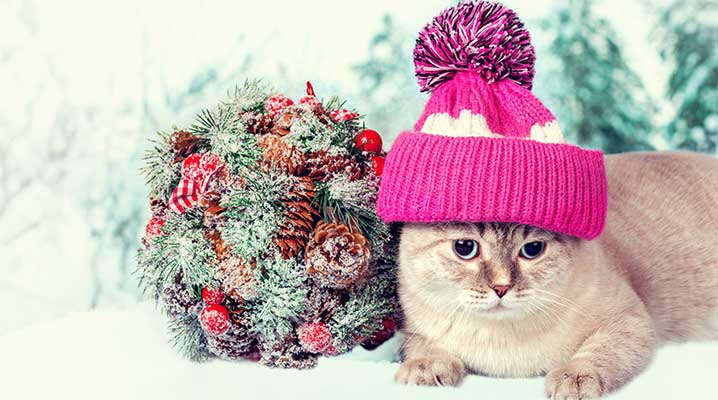 Protect Pets From Holiday Plants www.AZJungle