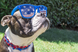 4th of July Dog www.HealthyPetPeeps.com