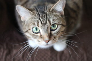 Tips For Calming Stressed Cats www.HealthyPetPeeps.com
