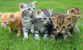 Why do people prefer cats www.HealthyPetPeeps.com