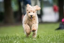 National Puppy Day www.HealthyPetPeeps.com