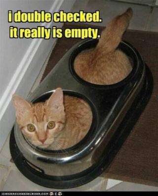 Empty cat food bowl www.HealthyPetPeeps.com