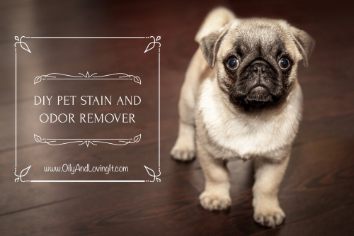 Diy Pet Stain And Odor Remover Recipe Young Living Essential