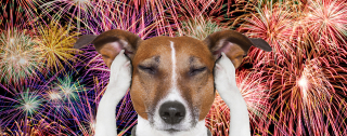 Dogs and Fireworks www.HealthyPetPeeps.com