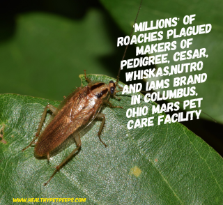 Mars Petcare Facility Plagued With Roaches www.HealthyPetPeeps.com