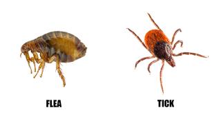 Fleas and Ticks www.HealthyPetPeeps.com
