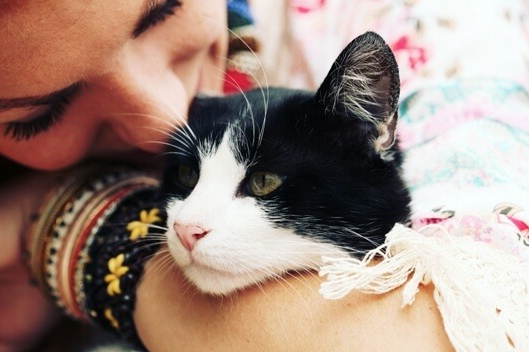 Caring for your senior cat www.Health4uandPets.com