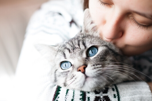 Caring-for-Senior-Cats www.Health4UandPets.com