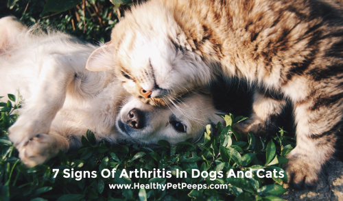 7 Signs Of Arthritis In Dogs And Cats www.HealthyPetPeeps.com