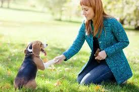 4 Successful Dog Training Tips www.HealthyPetPeeps.com