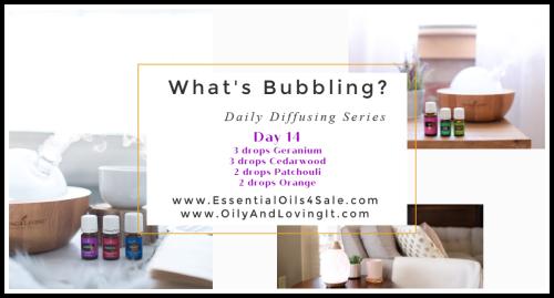 Whats Bubbling Day 14 www.EssentialOils4Sale.com