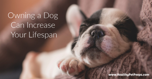Owning A Dog Can Increase Your Lifespan www.EssentialOils4Sale.com