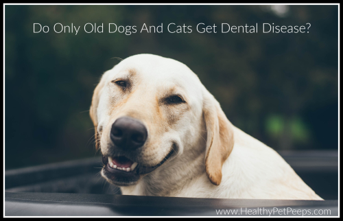 Do Only Old Dogs And Cats Get Dental Disease www.HealthyPetPeeps.com