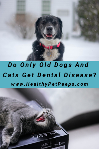 Do Only Old Dogs And Cats Get Dental Disease Find Out www.HealthyPetPeeps.com