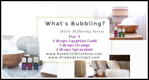 Whats Bubbling Day 4 www.EssentialOils4Sale.com