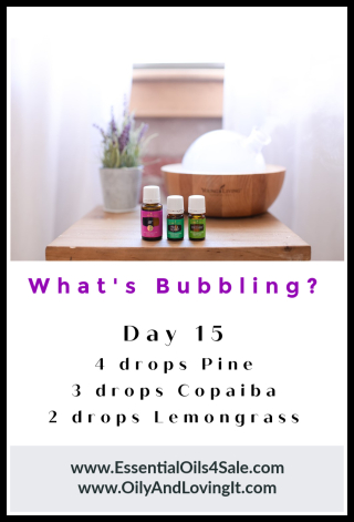 Whats Bubbling Day 15 - www.EssentialOils4Sale.com