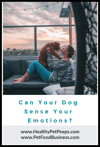 Can Your Dog Sense Your Emotions - www.HealthyPetPeeps.com