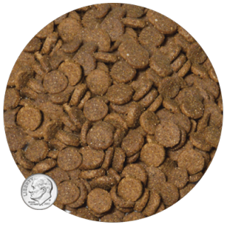 Life's Abundance All Stage Dog Food Kibble Size www.HealthyPetPeeps.com