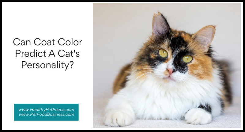 Can Coat Color Predict A Cat's Personality www.HealthyPetPeeps.com