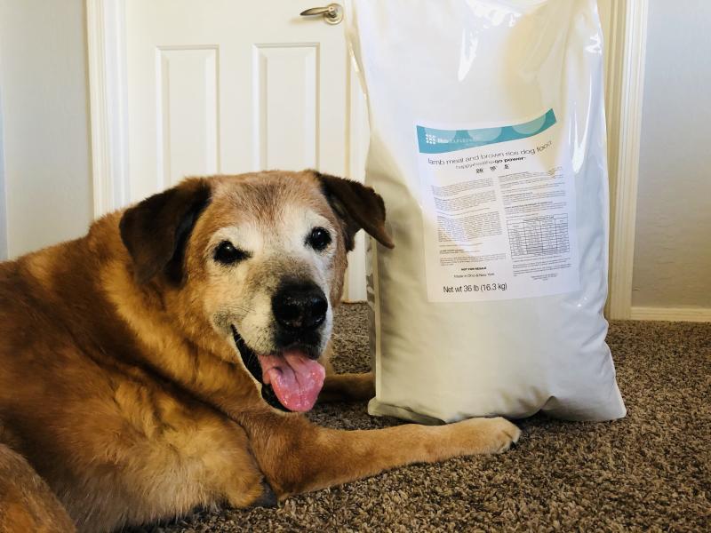Rio and his Life's Abundance Lamb Dog Food www.HealthyPetPeeps.com
