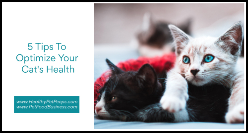 5 Tips To Optimize Your Cat's Health www.HealthyPetPeeps.com