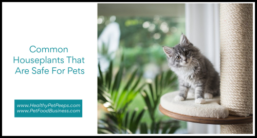 Common Houseplants That Are Safe For Pets www.HealthyPetPeeps.com