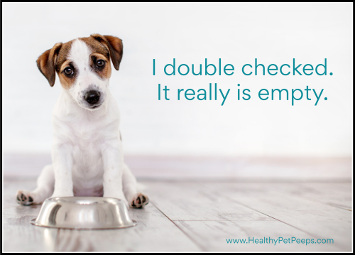 Don't let your dog have an empty bowl. Choose Life's Abundance at www.HealthyPetPeeps.com