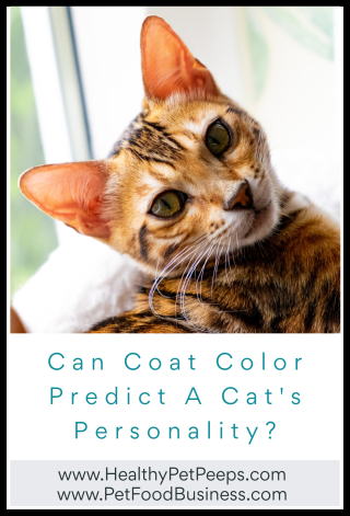 Can Coat Color Predict A Cat's Personality - www.HealthyPetPeeps.com