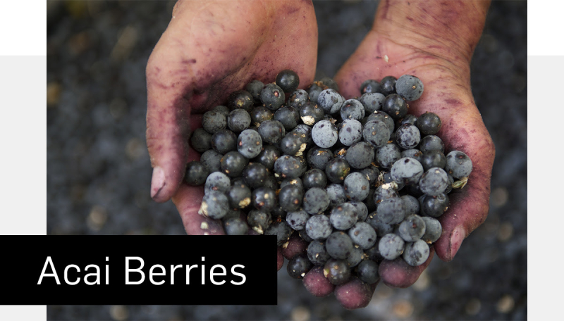 What are Acai berries www.HealthyEasyFood.com