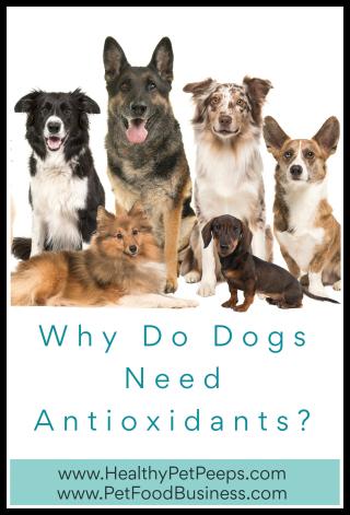 Why Do Dogs Need Antioxidants - www.HealthyPetPeeps.com