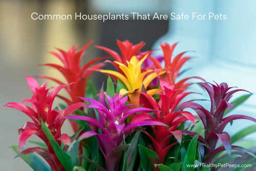Common Houseplants That Are Safe For Pets - www.HealthyPetPeeps.com