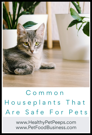Common Houseplants That Are Safe For Pets from www.HealthyPetPeeps.com