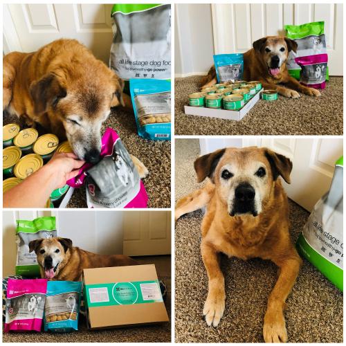 Rio loves Life's Abundance dog food and treats www.HealthyPetPeeps.com