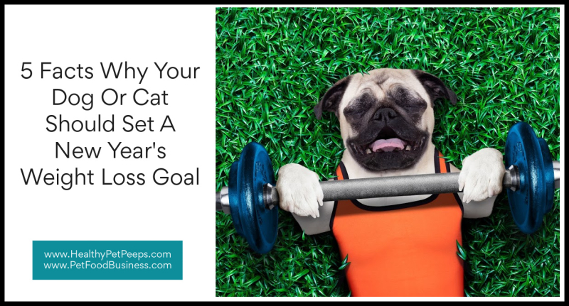 5 Facts Why Your Dog Or Cat Should Set A New Year's Weight Loss Goal www.HealthyPetPeeps.com