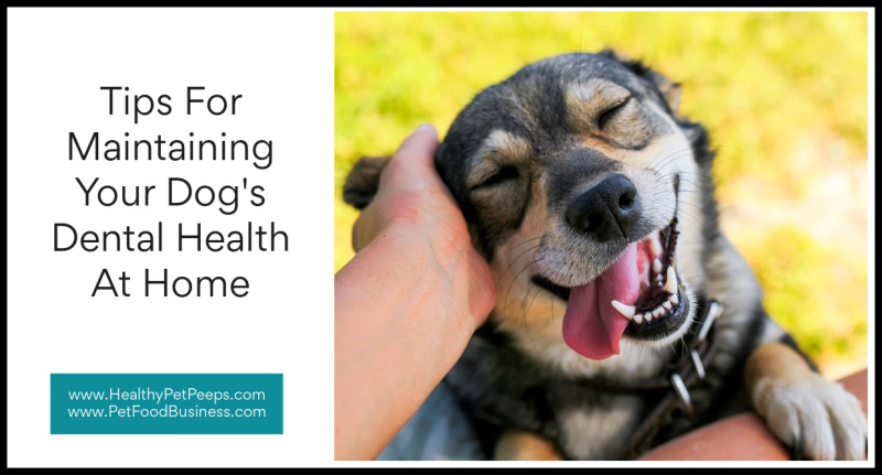 Tips For Maintaining Your Dog's Dental Health At Home www.HealthyPetPeeps.com