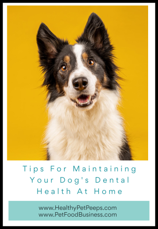 Tips For Maintaining Your Dog's Dental Health At Home - www.HealthyPetPeeps.com