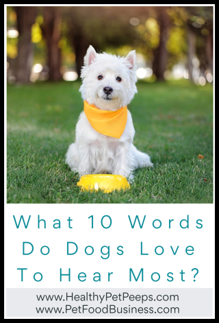 What 10 Words Do Dogs Love To Hear Most - www.HealthyPetPeeps.com